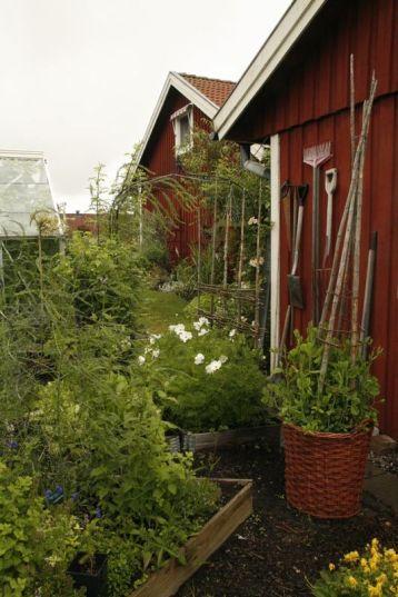 Köksträdgård6653