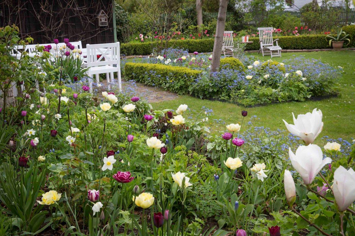 7 fina perenner för vårträdgården